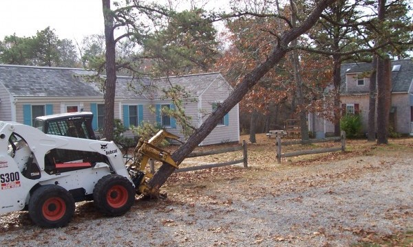 Tree removal with Bobcat