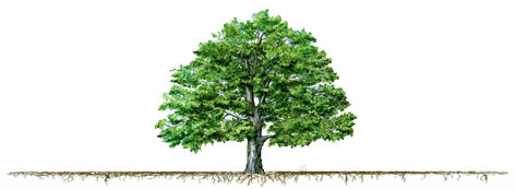 tree fertilizing is important for urban and residential trees.