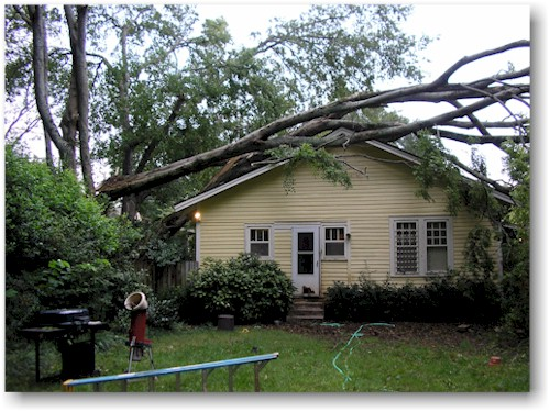 Fallen tree to be removed- tree removal job on Cape Cod