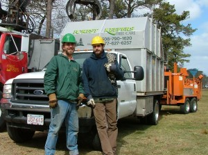 Chatham tree service professionals
